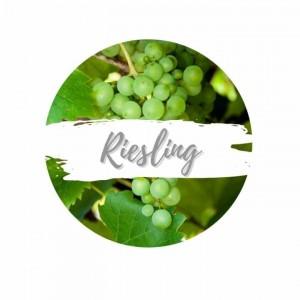 riesling-rebsorte-trauben-an-rebstock