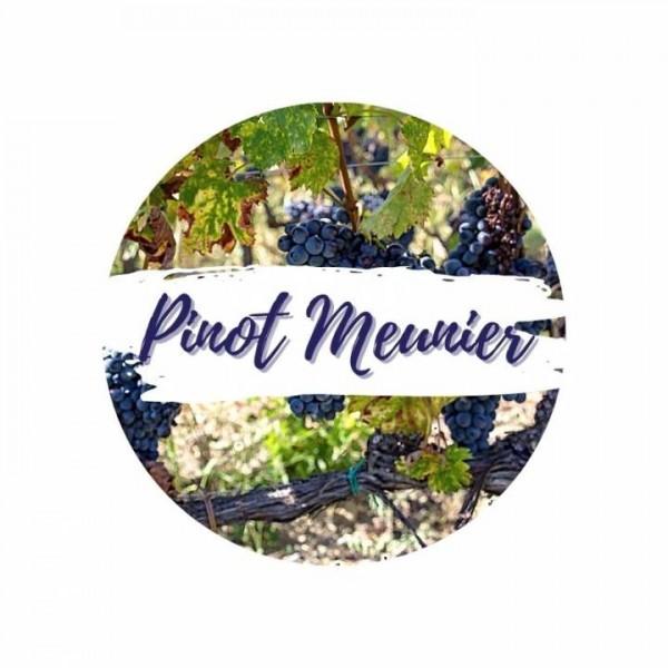 Pinot Meunier am Rebstock