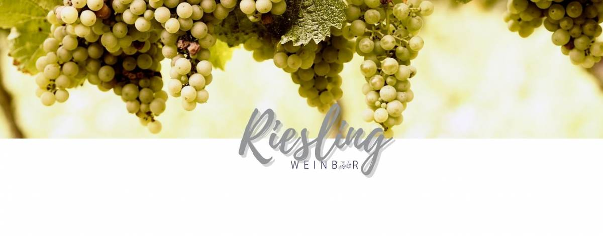riesling-grapes-white-backdrop