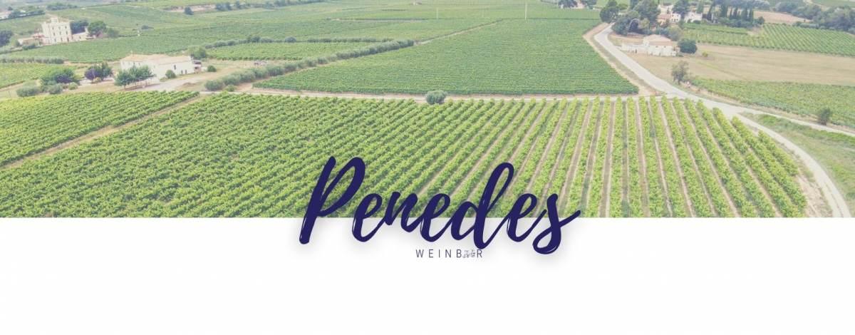 Top Weine aus der Anbauregion Penedes online kaufen