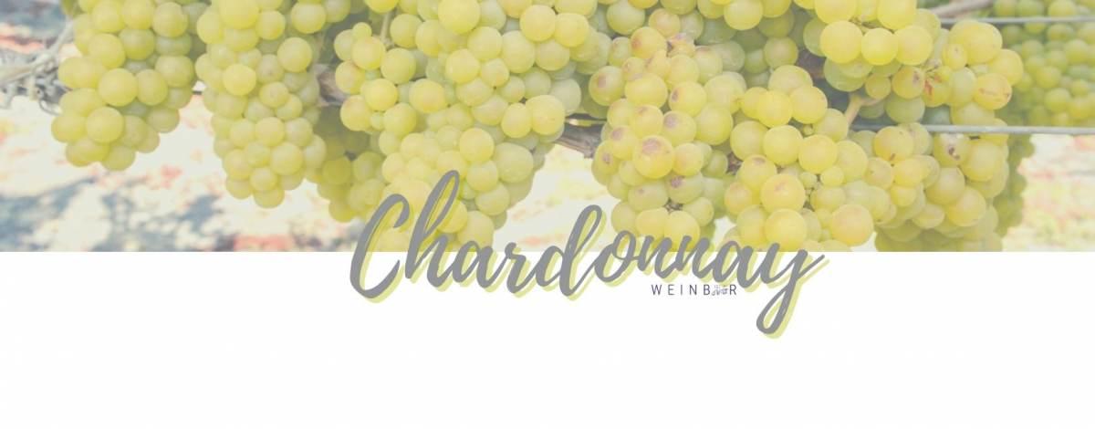 chardonnay-weinrebe