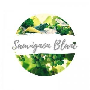 https://www.weinbaer.dewww.weinbaer.de/sauvignon-blanc